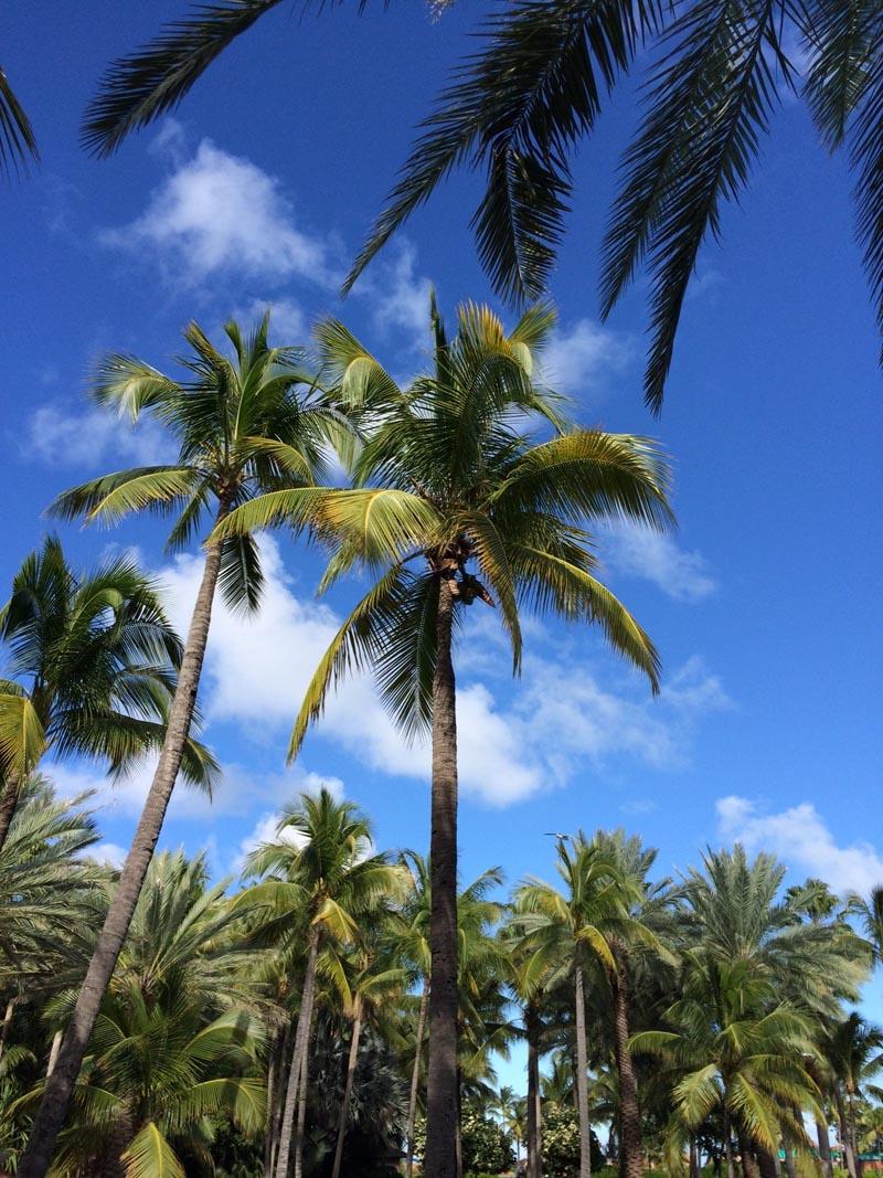 Coconut-Palms [Amin]
