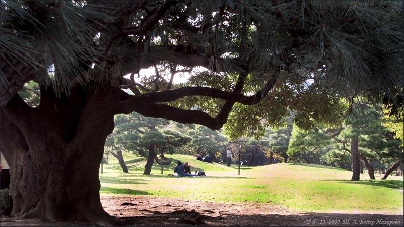 Old tree  [Т.А. Бойко-Назарова ]