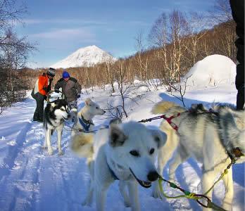 ...лайка, эскимосская лайка, гренландский хаски, ездовые собаки.