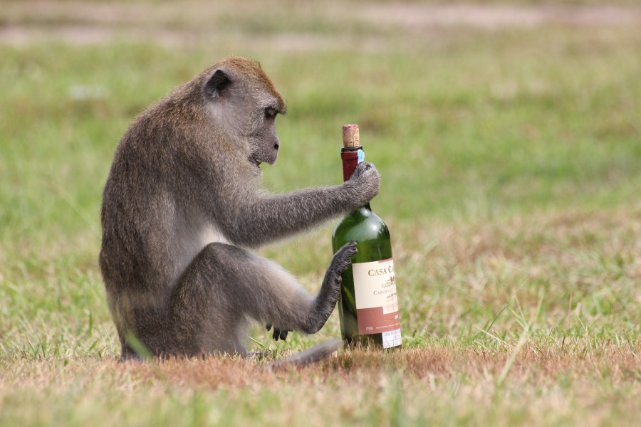 Кодирование от алкоголя на дому в ярославле