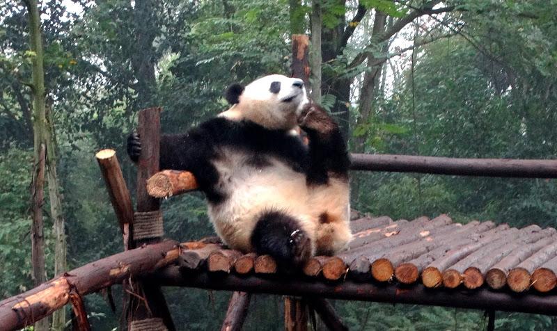 Коала на бамбуковой ветке секс поза