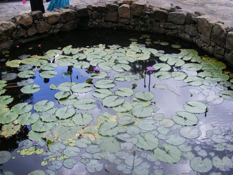 Бассейн с лилиями []