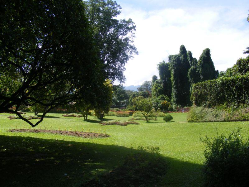 Королевский ботанический сад []