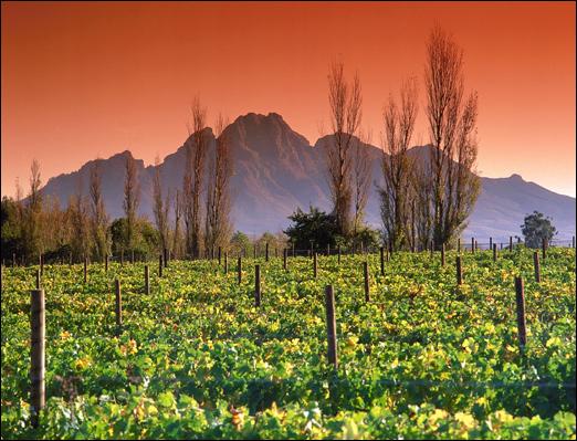 Винный путь - виноградники возле города Франшхоек []