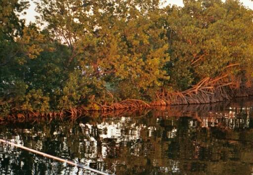 Тихое местечко для рыбалки. Ки Ларго. [C.B.]